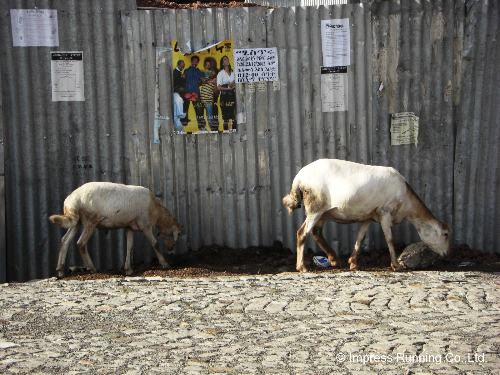Ethiopia_CIMG2949