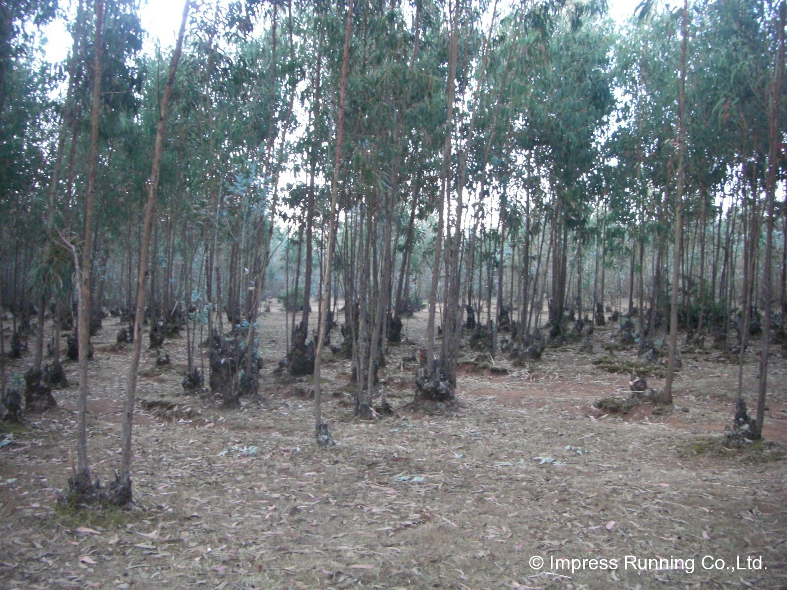 Ethiopia_CIMG3407