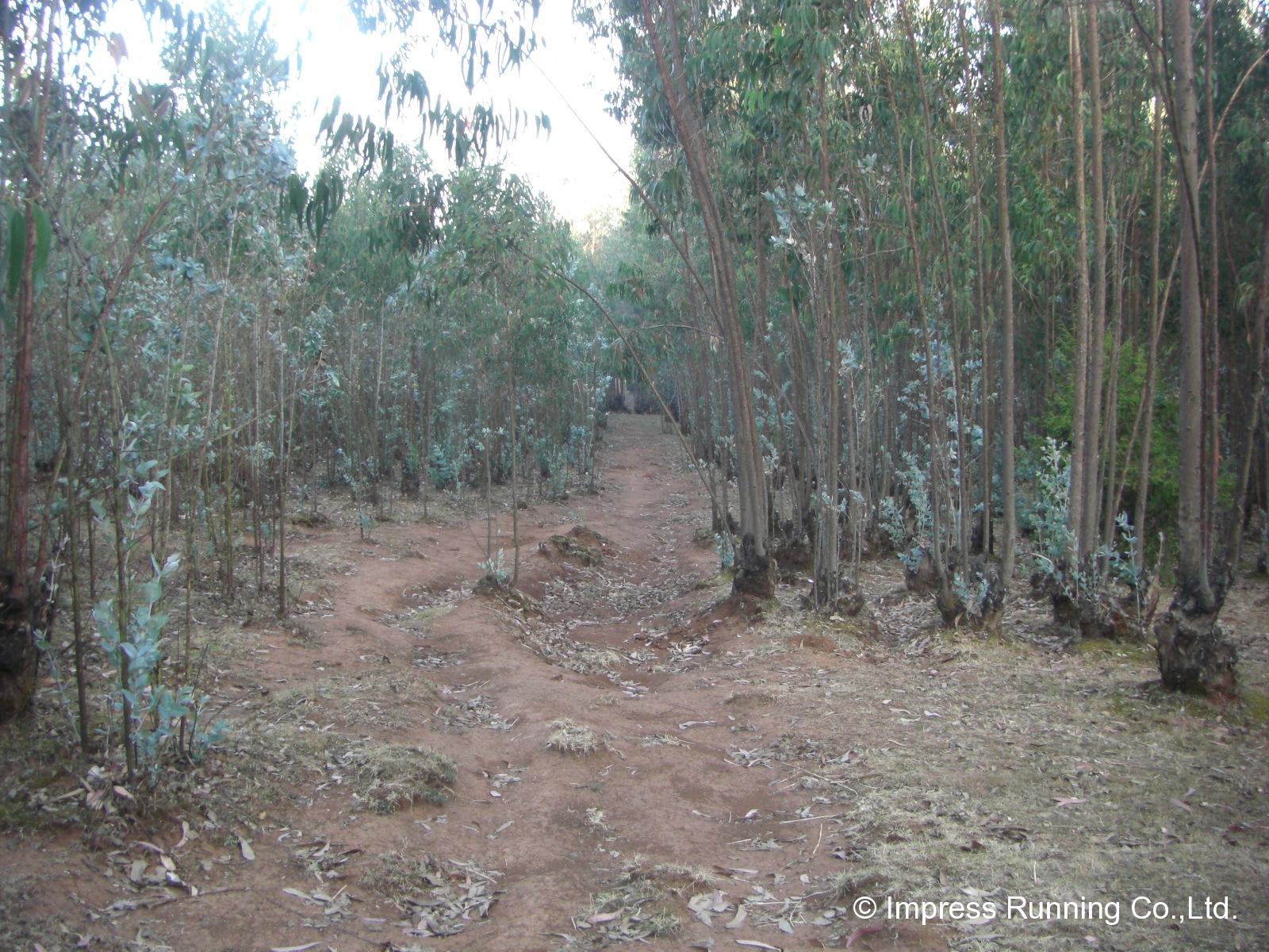 Ethiopia_CIMG3414