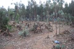 Ethiopia_CIMG3406