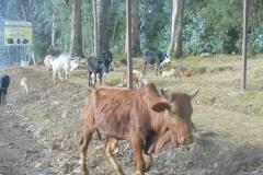 Ethiopia_CIMG6825